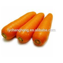 High quality wholesale fresh carrot S, M, L, 2L, 3L