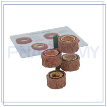 Amostras de vasos sanguíneos plastinated PNT-0735 para venda