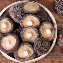 Cogumelos Shiitake Secos de Alta Qualidade