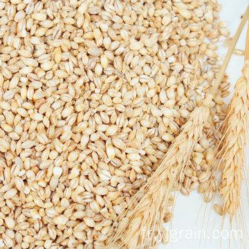 Produits agricoles en gros grain de blé classe multigrains