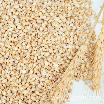Wholesale Agriculture Products wheat kernel Multigrain class