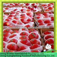 100-125pcs maçã huaniu