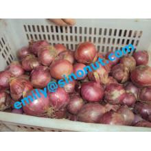 De Buena Calidad Cebolla Roja Fresca 5-7cm