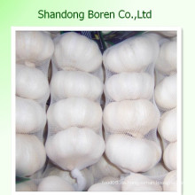 Essen frisches Gemüse Chinesisch Standard Frischer Knoblauch Knoblauch