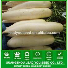 NR131 Caitu гибридные семена редьки производитель Гуанчжоу