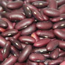 Frijoles secos de color rojo oscuro