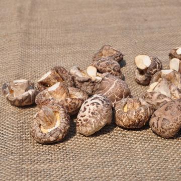 Venda direta da fazenda de cogumelos secos de alta qualidade