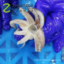 Tube de calmar congelé avec calmar tentacule T + T