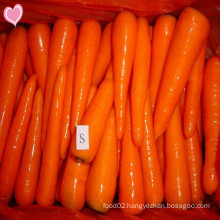 2016 Fresh Carrots with Delicious Taste Price