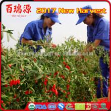 Import Goji-Beere bulk goji Bio-Lebensmittel gefrorene Früchte