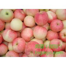Exportieren Sie gute Qualität frische chinesische Gala Apple