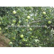 Verde gala / maçã verde maçã vermelha da China