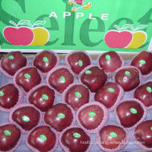 De Boa Qualidade Fresh Red Apple, chinês Red Delicious Apple
