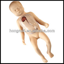 ISO Advanced Neonatal Peripheral and Central Vein Intubation Training, Baby Care Model