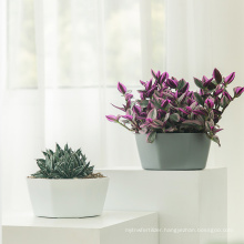 Factory cheap price garden irregular shape plastic flower pots and planters plant pots manufacturer