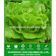 NLT07 Gaolian quality lettuce seeds for planting,seeds for agricuNLTural
