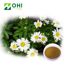 Chrysanten thee extract poeder
