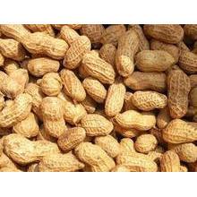 Alta qualidade para exportação de amendoim em Shell