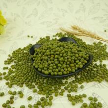 2012 nueva cosecha pequeña verde frijol mungo para brotes, 2.8-4.0mm, origen Hebei