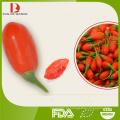Volume convencional lycium barbarum ruthenicum murr / goji berries price