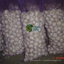 Fraîche nouvelle culture chinoise pure ail blanc