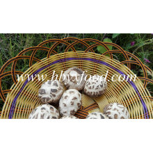 Dried White Flower Shiitake Mushroom Prices Dehydrated Vegetable