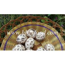 Сушеный Белый Цветок Шиитаке Цены На Грибы Обезвоженные Овощи