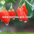 Fábrica al por mayor New Harvest Fruit Products Wolfberries