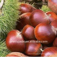 High Quality Low Price Chestnut