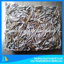 Peixes da lança da areia de Bqf para a alimentação animal