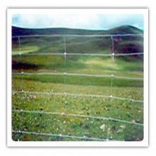Electro оцинкованной железной проволоки сетки крупного рогатого скота фехтования (anjia-527)