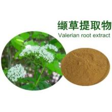 Common Valerian Root P.E. For Relief Insomnia and Anxiety