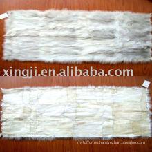 Placa de vientre de zorro azul chino