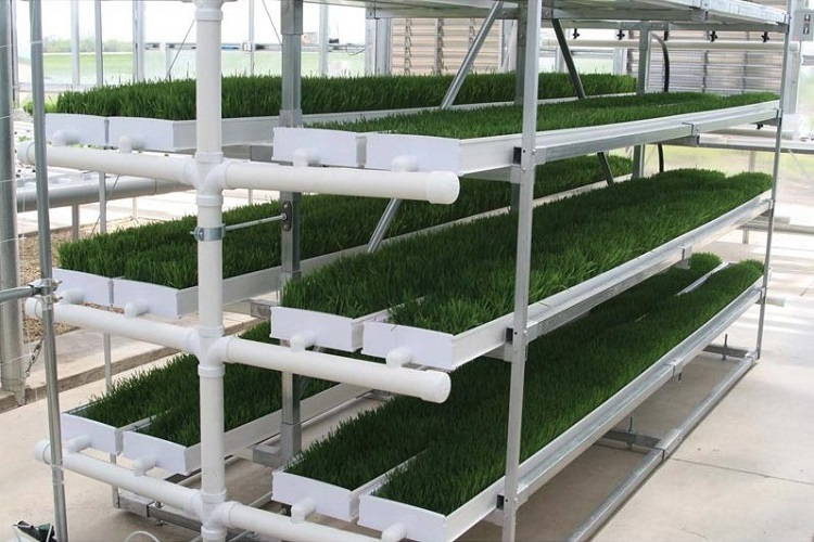SK-Fodder ProFeed Growing System