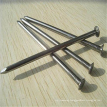 Hot Sale Common Nail with Galvanized