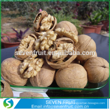 Hot selling dried walnut fruit in shell with factory price