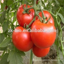high quality 100% nature tomato p.e.