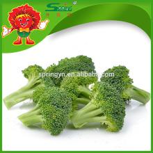 Precio de fábrica al por mayor China Fresh Broccoli