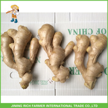 Chinese Air Dried Ginger