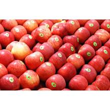 Good Delicious China FUJI Apfel