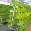 Un système de culture hydroponique de type tour pour l'agriculture de serre
