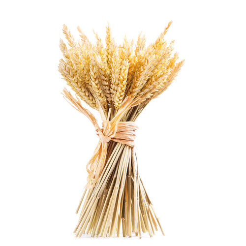 Natural nutrition healthy wheat germ hot sale