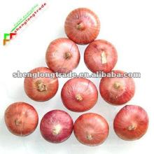 Frisches Gemüse 2011 Rote Zwiebel
