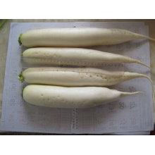 2011chinese cheap white radish 500g