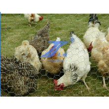 High Quality Galvanized Chicken Wire Mesh (TS-E22)