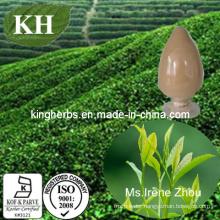 Green Tea Extract Tea Polyphenols 15%-98%