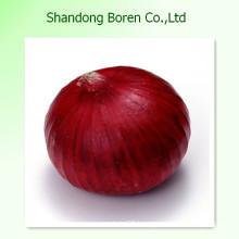 High Quality Fresh Red Onion