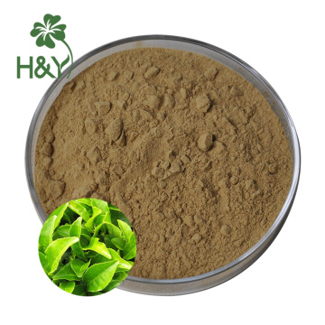 Water soluble green tea extract powder l theanine