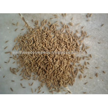 Cumin Seeds From India