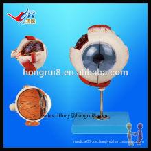 ISO Advanced Eyeball Modell, Menschliches Auge